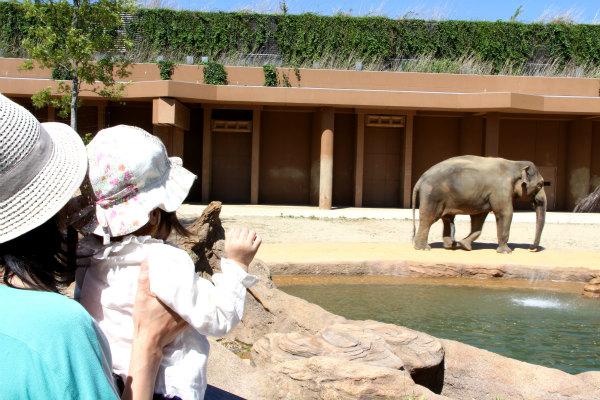 象に初対面